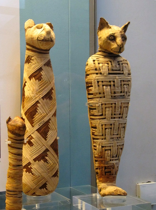 Cat mummies, The British Museum