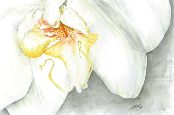 White Orchid, watercolour, 2011